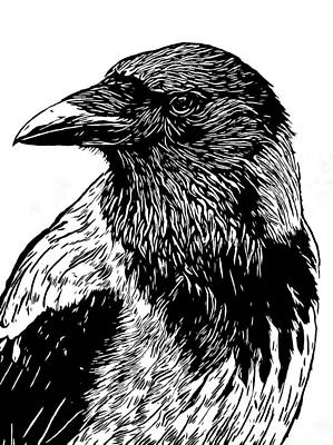 Drawing - Portrait Of A Crow With Head Turned Looking In Black And White I by Philip Openshaw