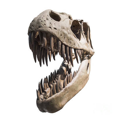 Dinosaur Digital Art - Portrait Of A Dinosaur Skeleton, Isolated On Pure White. by Caio Caldas