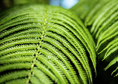 Photograph - Portrait Of A Fern by T Brian Jones
