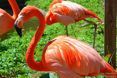 Photograph - Portrait Of A Flamingo by Lisa Wooten