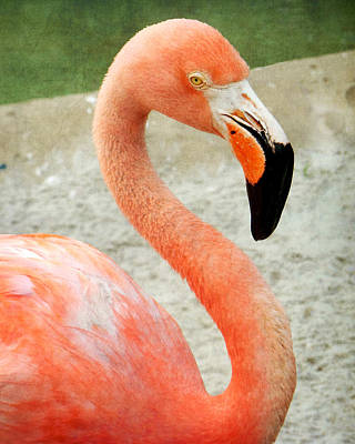 Photograph - Portrait Of A Flamingo by Valerie Reeves