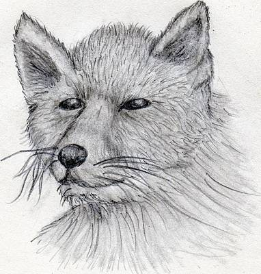 Wall Art - Drawing - Portrait Of A Fox by Tina Partridge
