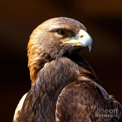 Photograph - Portrait Of A Golden Eagle by Sue Harper