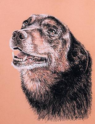 Portrait Of A Good Looking Dog Art Print by Glenn Boyles