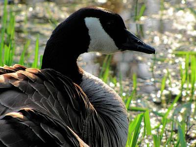 Photograph - Portrait Of A Goose by Scott Hovind