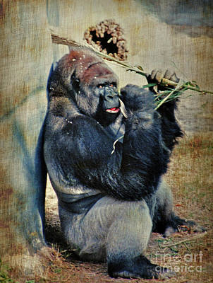 Photograph - Portrait Of A Gorilla by Lydia Holly