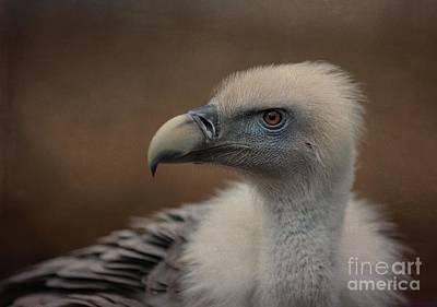 Photograph - Portrait Of A Griffon Vulture by Eva Lechner
