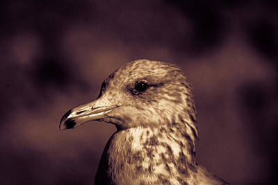 Photograph - Portrait Of A Gull by Lora Lee Chapman