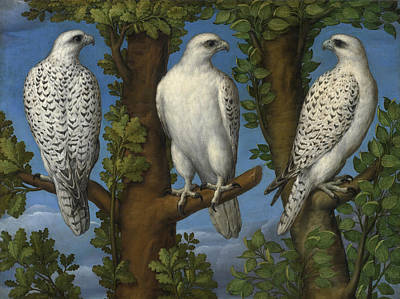 Painting - Portrait Of A Gyrfalcon Viewed From Three Sides by Lombard Master