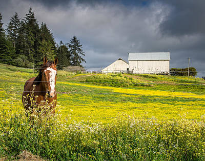 Photograph - Portrait Of A Horse And Barn by Greg Nyquist