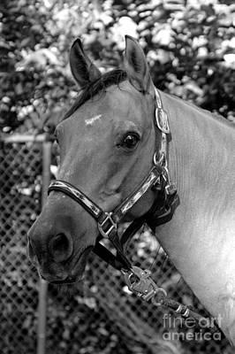 Photograph - Portrait Of A Horse by Frederic BONNEAU Photography