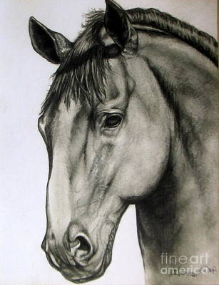 Portraits Drawing - Portrait Of A Horse by Georgia's Art Brush