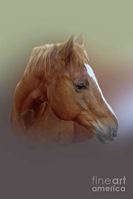 Photograph - Portrait Of A Horse by Judy Hall-Folde