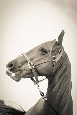 Photograph - Portrait Of A Horse by Kelly Hazel
