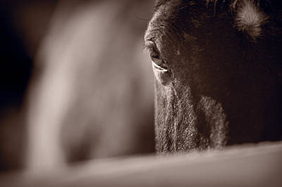 Portrait Of A Horse Kentucky Art Print by Steve Gadomski