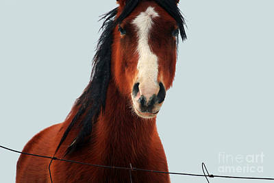 Equestrian Apparel Photograph - Portrait Of A Horse by Laura Birr Brown