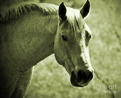 Photograph - Portrait Of A Horse No.2 by Lydia Holly