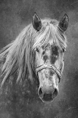 Portrait Of A Horse Art Print by Tom Mc Nemar