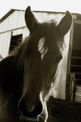 Portrait Of A Horse Art Print by Toni Hopper