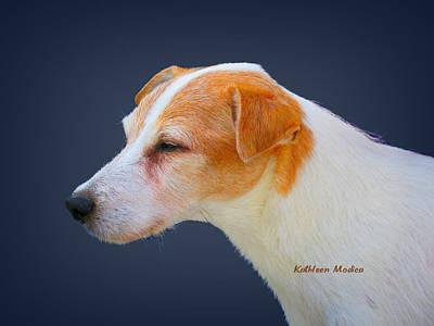 Photograph - Portrait Of A Jack Russel by KLM Kathel