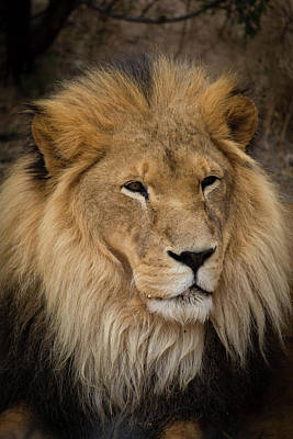 Photograph - Portrait Of A King by Teresa Wilson