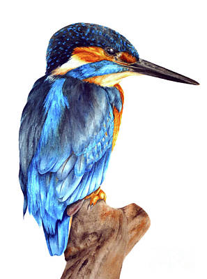Kingfisher Painting - Portrait Of A Kingfisher by Marie Burke