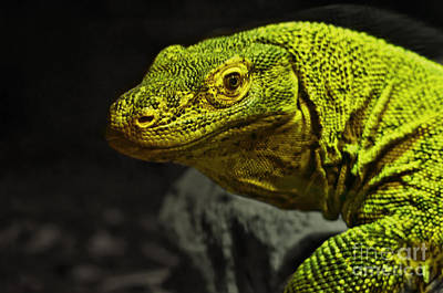Photograph - Portrait Of A Komodo Dragon by Jim Fitzpatrick