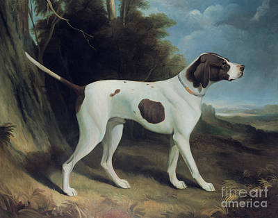 Cute Dog Painting - Portrait Of A Liver And White Pointer by George Garrard