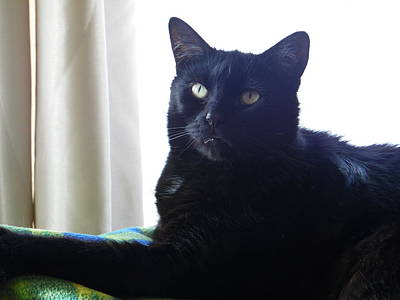 Photograph - Portrait Of A Lucky Black Cat Called Pepsi by Mary J Tait