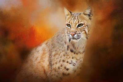 Photograph - Portrait Of A Lynx by Lynn Bauer