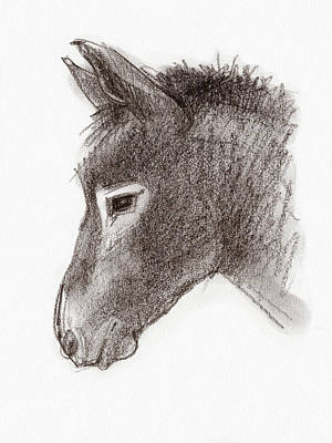 Drawing - Portrait Of A Mule by Judith Kunzle