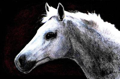 Drawing - Portrait Of A Pale Horse by Angela Davies