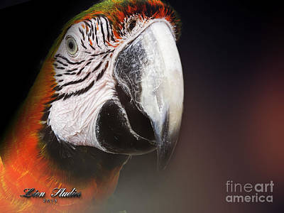 Portrait Of A Parrot Art Print