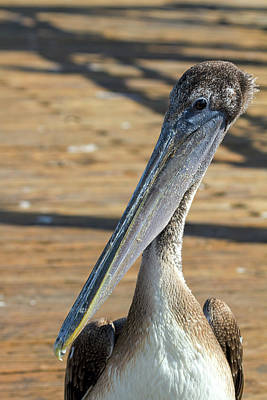 Portrait Of A Pelican On The Pier Art Print