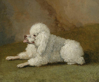 Painting - Portrait Of A Poodle by Treasury Classics Art