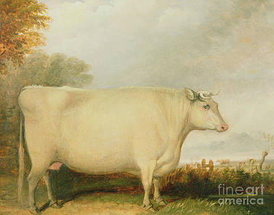 Dairy Farm Painting - Portrait Of A Prize Cow by John Vine