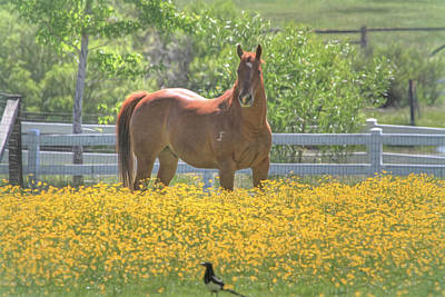 Magpie Photograph - Portrait Of A Quarter Horse by Donna Kennedy