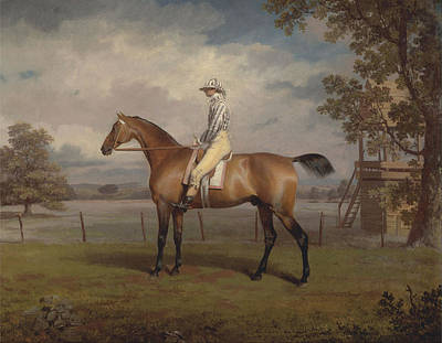 Women On Horses Painting - Portrait Of A Racehorse by MotionAge Designs
