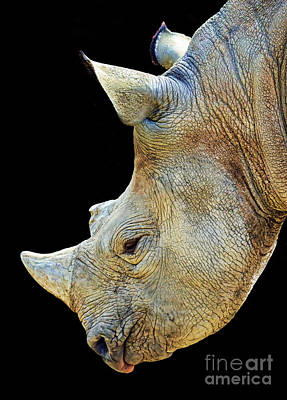 Digital Art - Portrait Of A Rhinoceros II by Jim Fitzpatrick