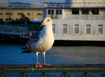 Photograph - Portrait Of A Seagull by Bonnie Follett