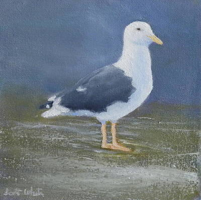 Portrait Of A Seagull Art Print