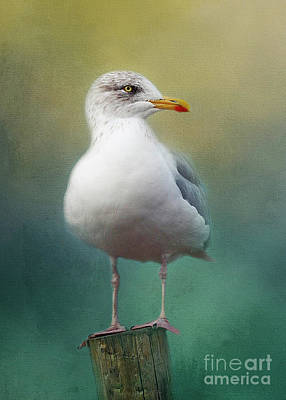 Photograph - Portrait Of A Seagull by Teresa Wilson