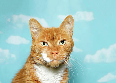 Portrait Of A Senior Tabby Cat Art Print by Sheila Fitzgerald