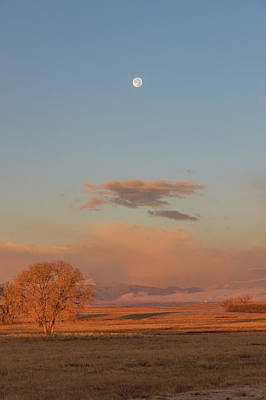 Photograph - Portrait Of A Setting Moon At Sunrise by Tony Hake