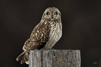 Photograph - Portrait Of A Short-eared Owl by Everet Regal