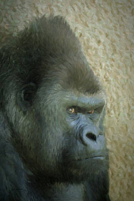 Digital Art - Portrait Of A Silverback Gorilla by Ernie Echols
