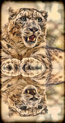 Photograph - Portrait Of A Snow Leopard With A Reflection II by Jim Fitzpatrick