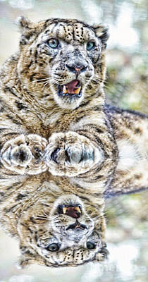 Photograph - Portrait Of A Snow Leopard With A Reflection by Jim Fitzpatrick