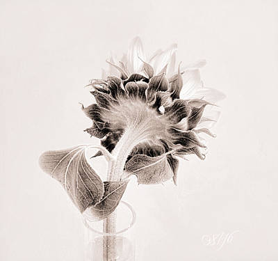 Photograph - Portrait Of A Sunflower by Louise Kumpf