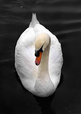 Photograph - Portrait Of A Swan by Julius Reque